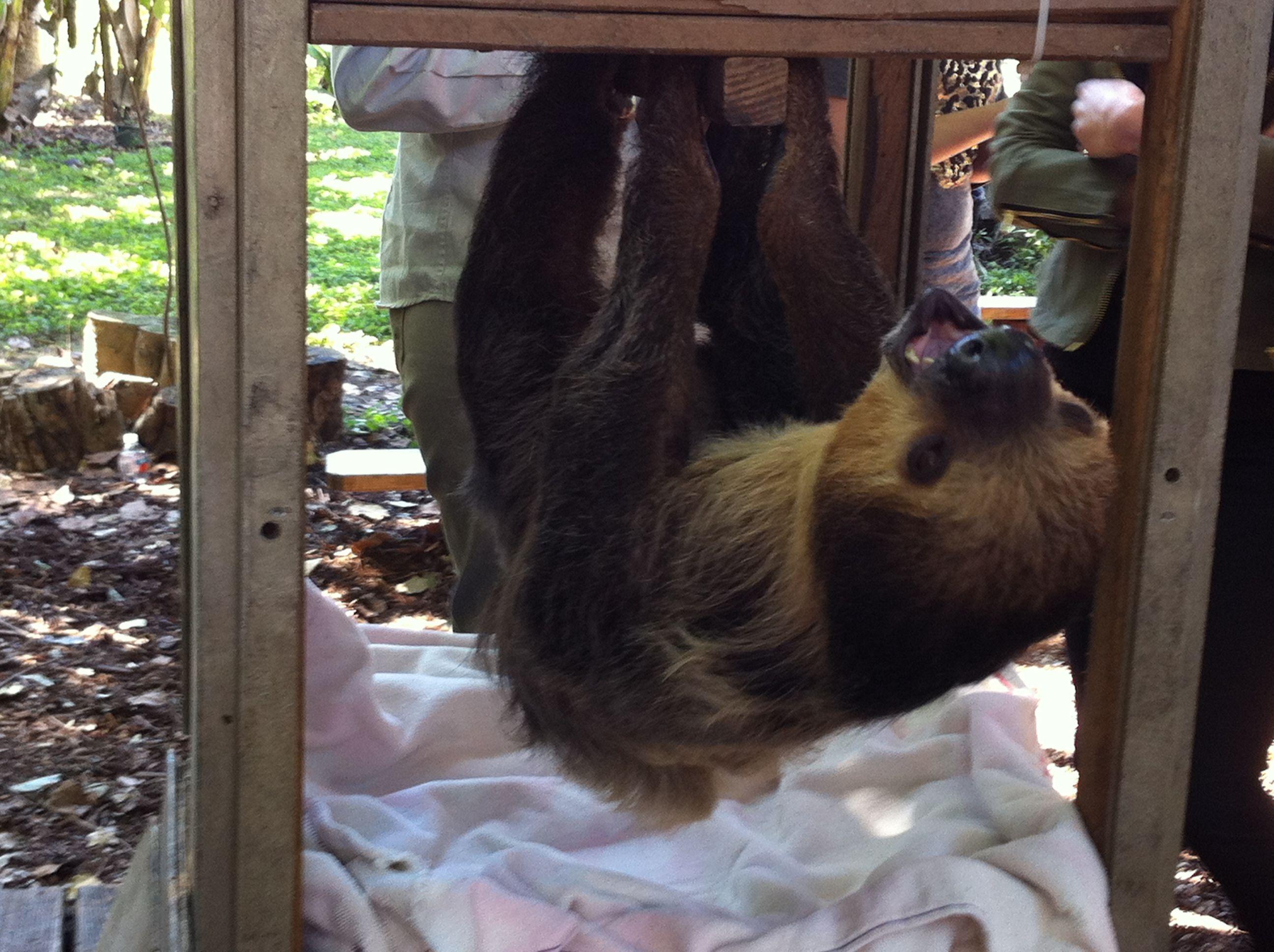 Safari Edventures Homestead, FL We pet a Sloth!!! 2014