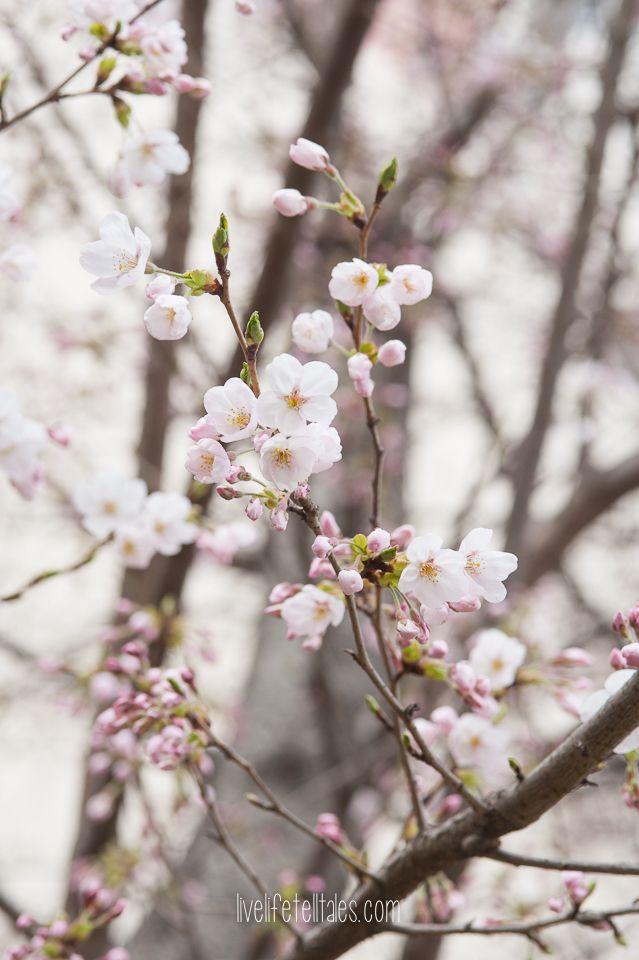 Macro Monday Volume 6 Live Life Tell Tales Flowers Photography South Korea Travel Korea Travel
