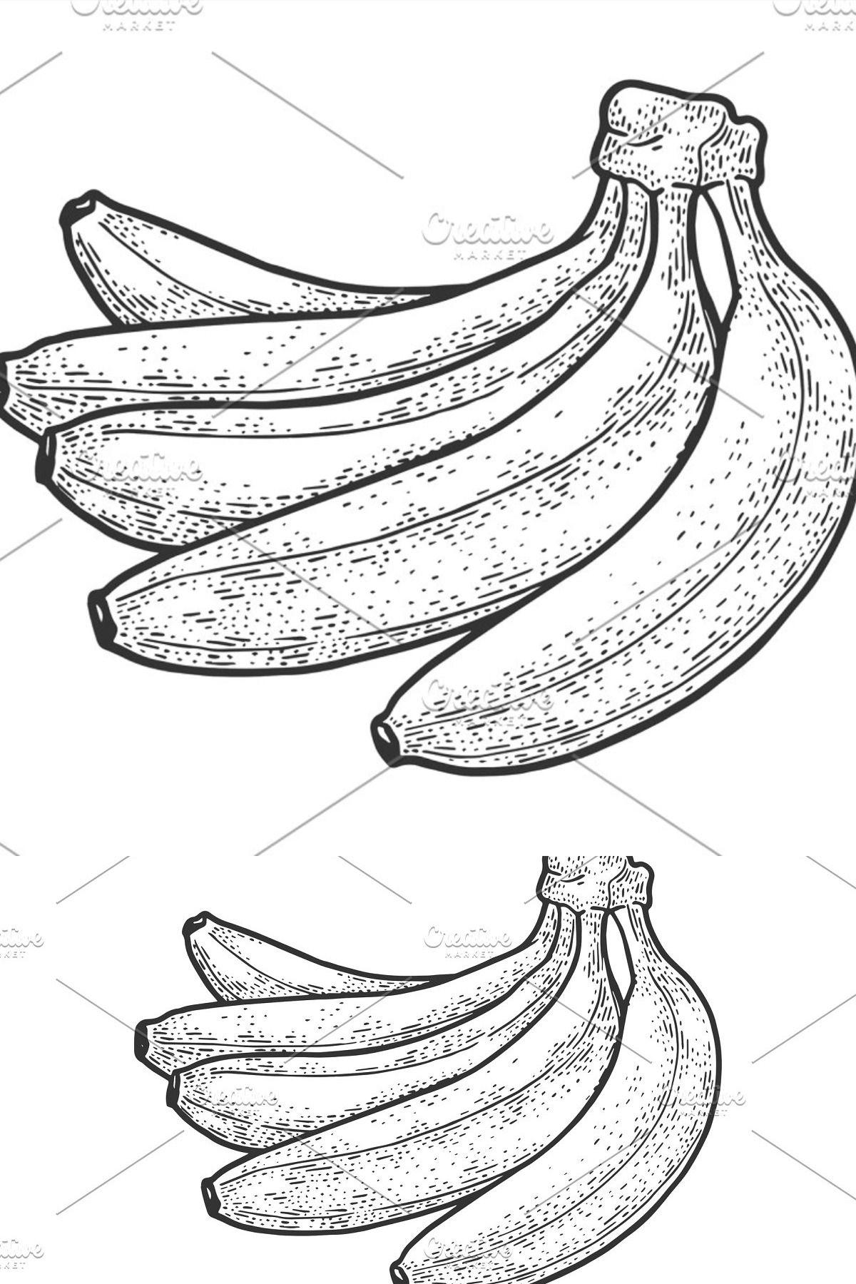 Bananas Fruit Sketch Vector In 2020 Banana Sketch Sketches
