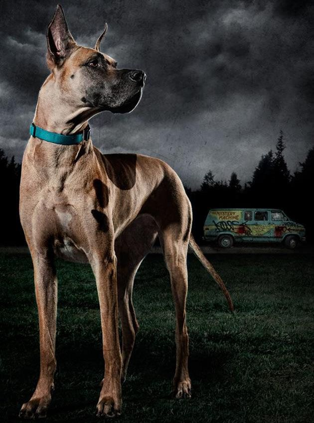Scooby Doo Vs The Zombie Apocalypse Scooby Doo Dog Scooby Doo
