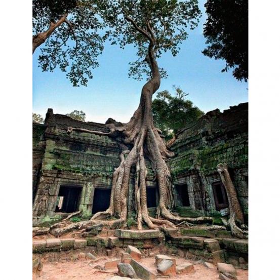 Temple Ta Prohm au Cambodge