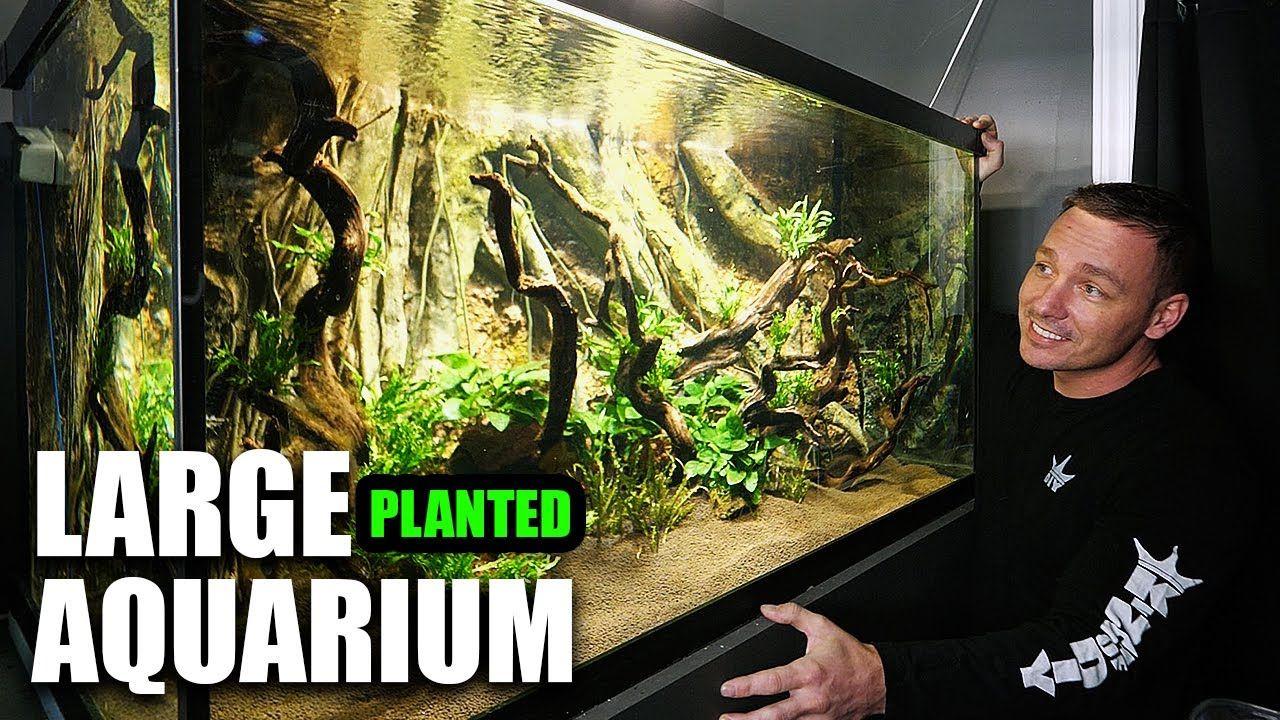 Aquariums This Aquarium Is Absolutely Phenomenal In 2020 Planted Aquarium Aquarium Diy Set