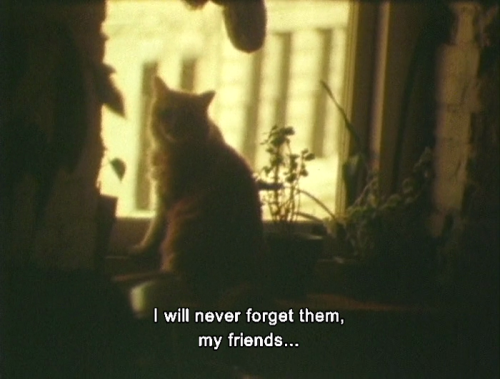 Jonas Mekas As I Was Moving Ahead I Saw Brief Glimpses Of Beauty 2000 Mood Quotes Aesthetic Words Movie Quotes