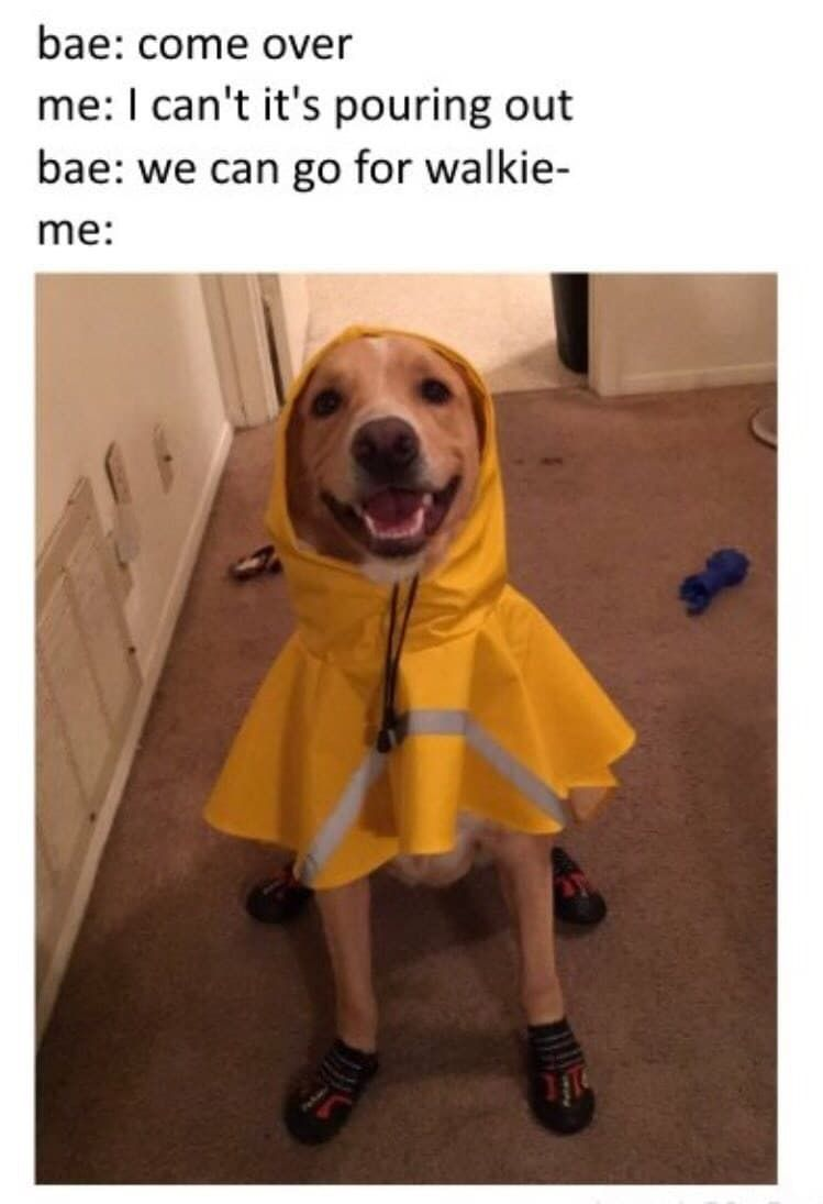 100 Dog Memes That Will Keep You Laughing For Hours Dog