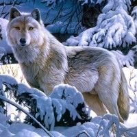 Красивые фото животных зимой в лесу