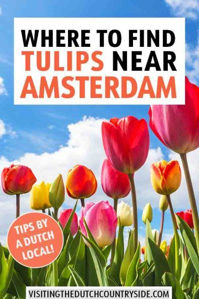 Where To See And Find Dutch Tulip Fields In The Netherlands