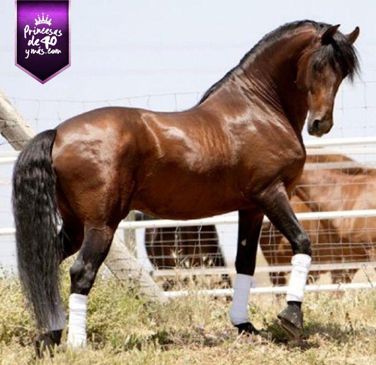 Qué caballo tan hermoso.