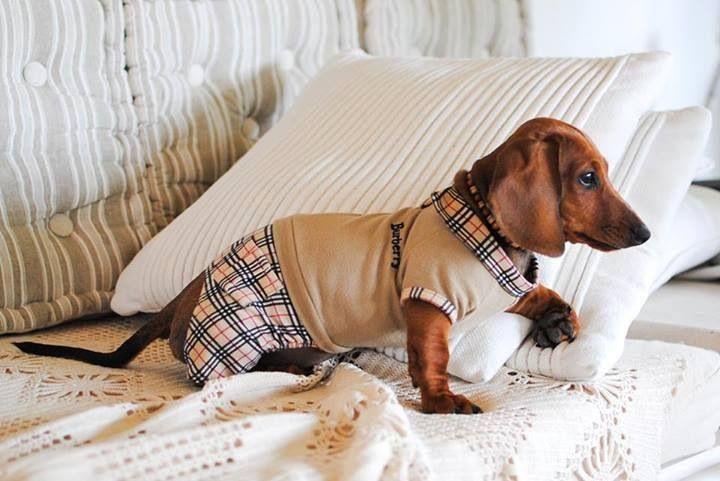 Burberry Onesie Weiner Dog Dachshund Lovers Dashund