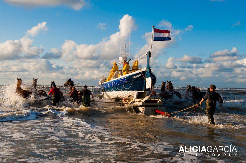 #Caballos tirando del barco pesquero. #horses #Holland #Ameland