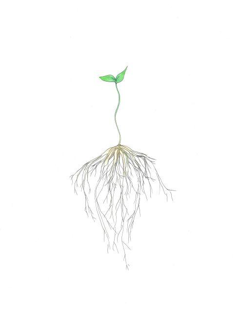 MICROGREENS | Roots tattoo, Earthy tattoos, Roots drawing