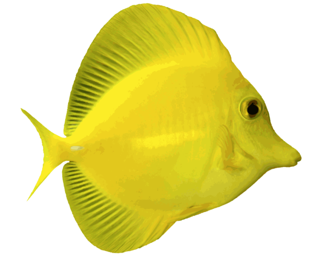 Amazing Clip Art Of Saltwater Fish Fish Angelfish And