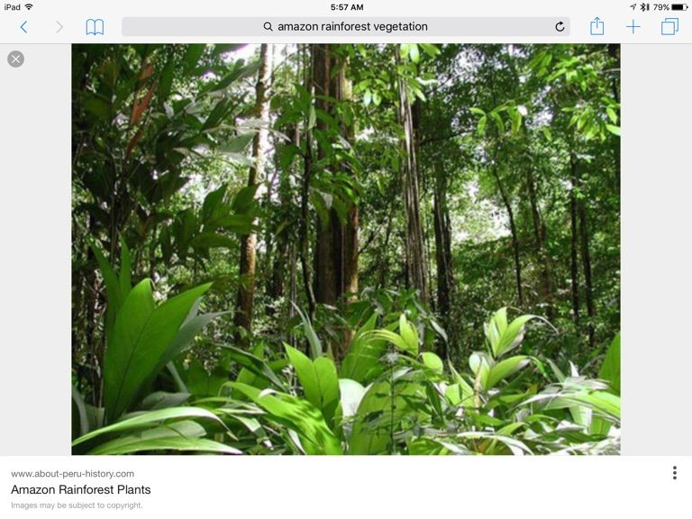 Pin By Sandele1 On Amazon Rainforest And It S People Flora