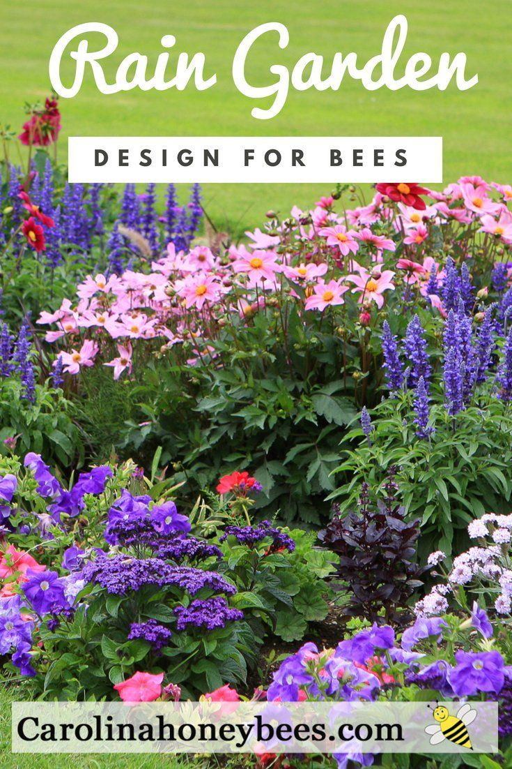 Increase Bee Habitat With Rain Gardens - Carolina ...