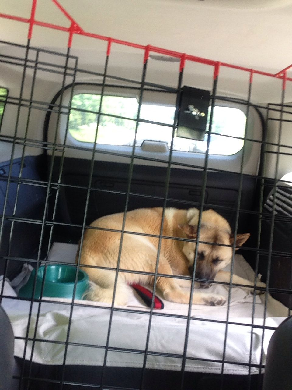 Sundance rescued on 52414 from Pulaski County Animal