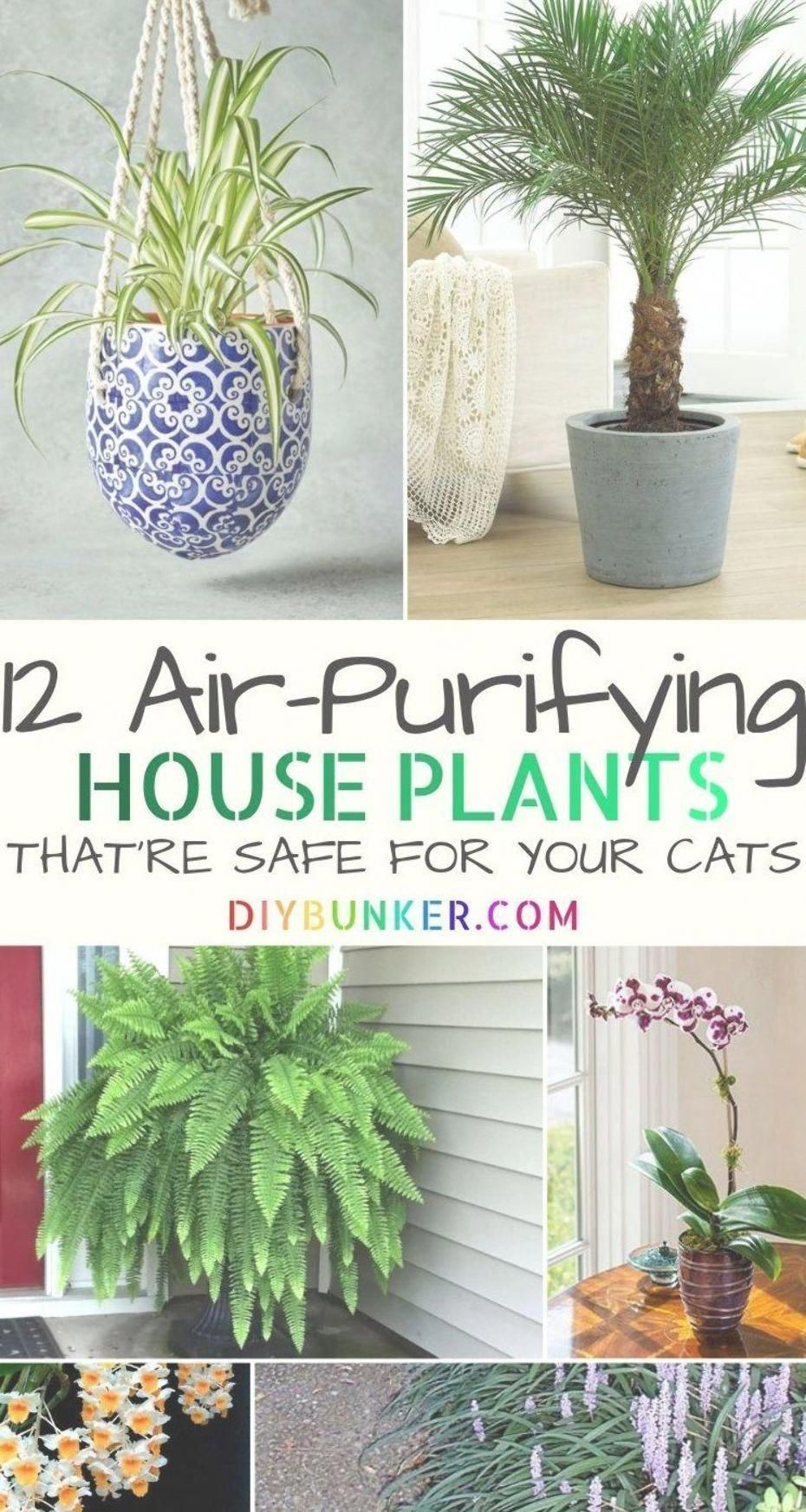 These air purifying house plants are even safe for cats