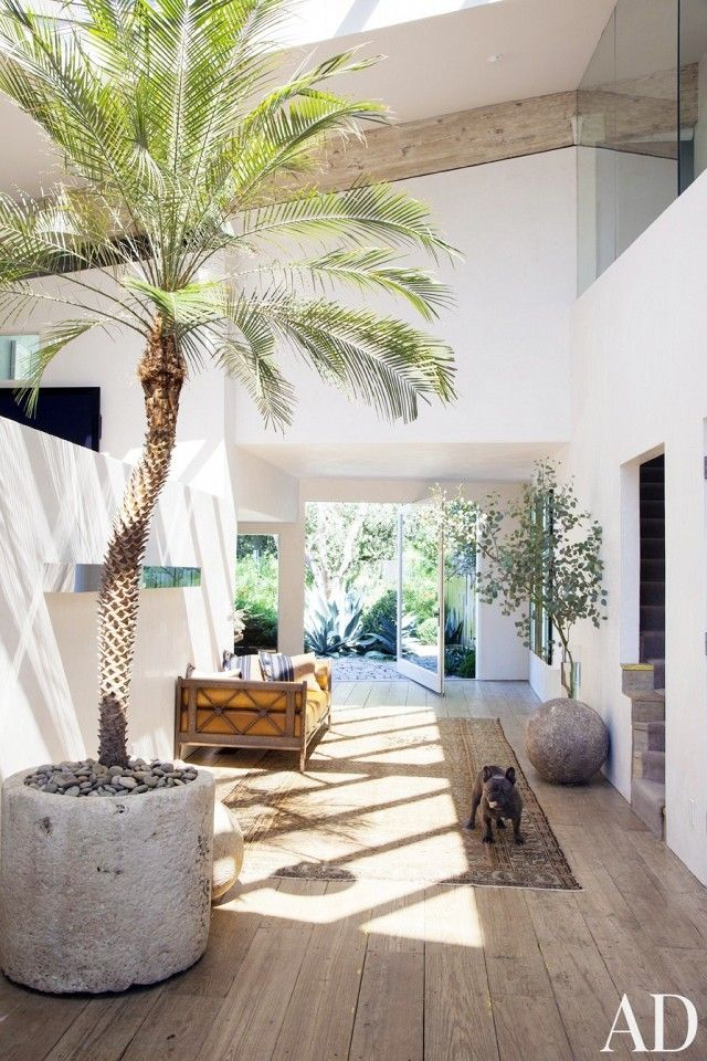 Indoor Trees - Potted Plants - Home Decor | Modern entryway, Palm ...