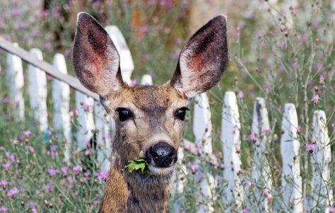 7 Plants That\u0027ll Keep Deer Out Of Your Garden Deer Dealings