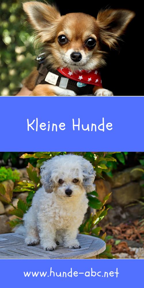 Kleine Hunde Eine Freude Fur Die Familie Allgemeine Infos