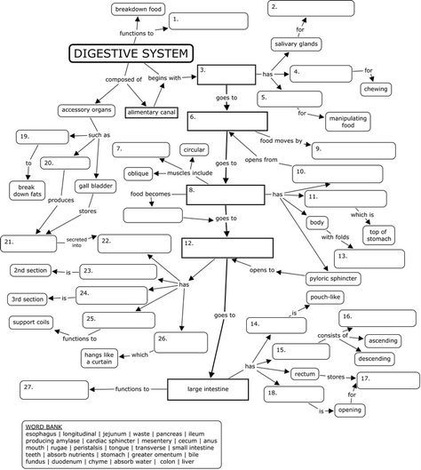 Concept map: digestive system (With images) | Digestive ...