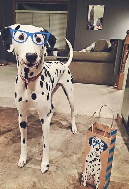 My dog found his doppelgänger and I found my new favorite gift bag. http://ift.tt/2pwDe81