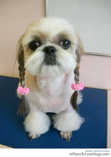 Simply Love It Dog Haircuts Dogs Dog Grooming