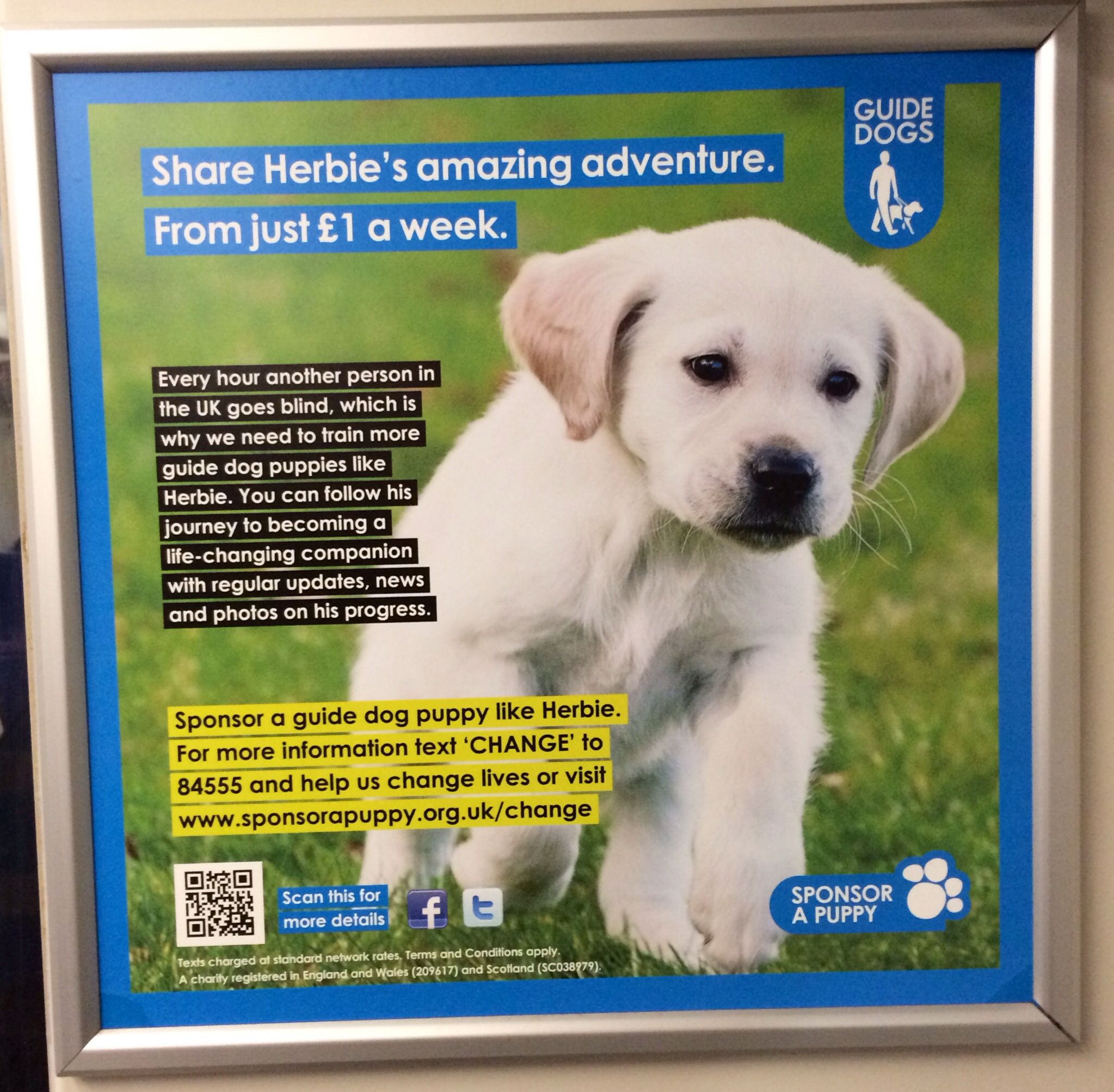 Cute Creative Calling For People To Sponsor A Puppy With