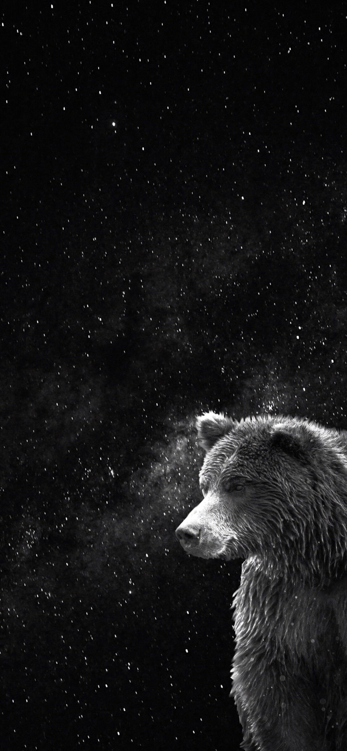 Bear In Front Of Night Sky Download At Http Www Myfavwallpaper Com 2018 03 Bear In Front Of Night Sky Ht Moon And Stars Wallpaper Bear Wallpaper Night Skies