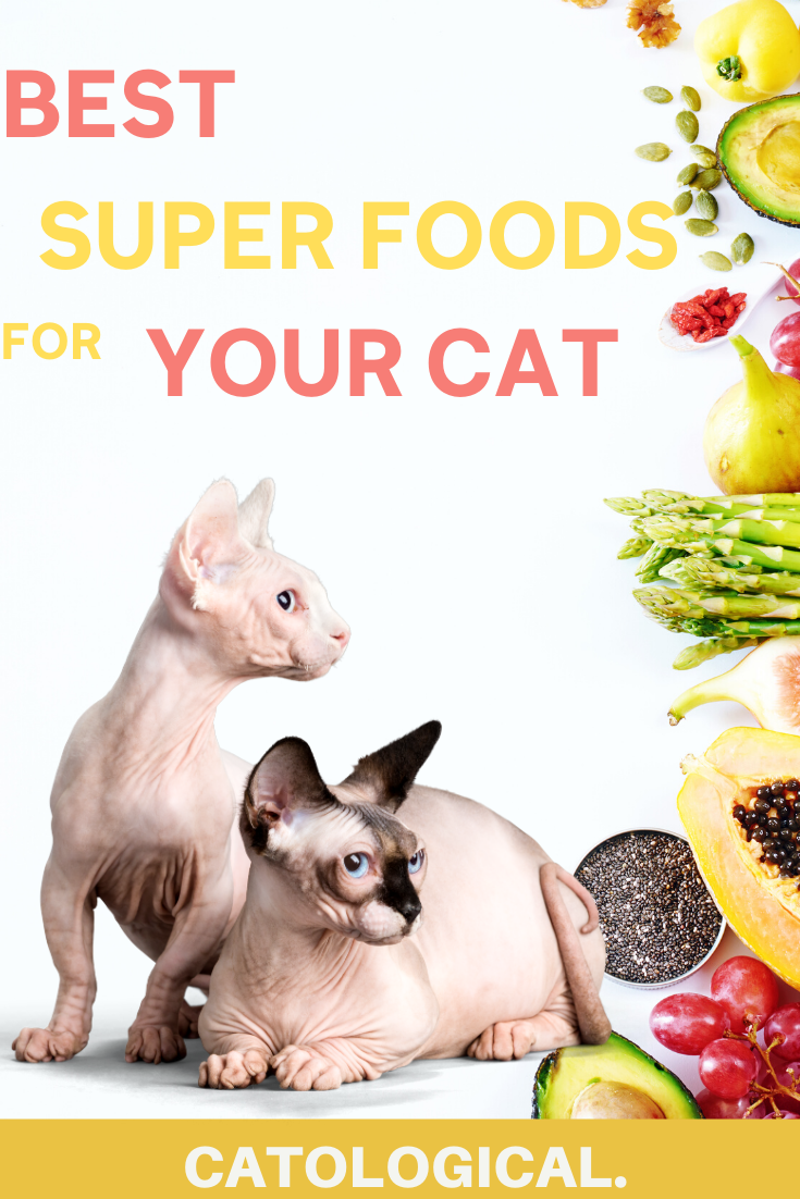 Cats Superfoods Cat Advice Cat Nutrition Cat Care