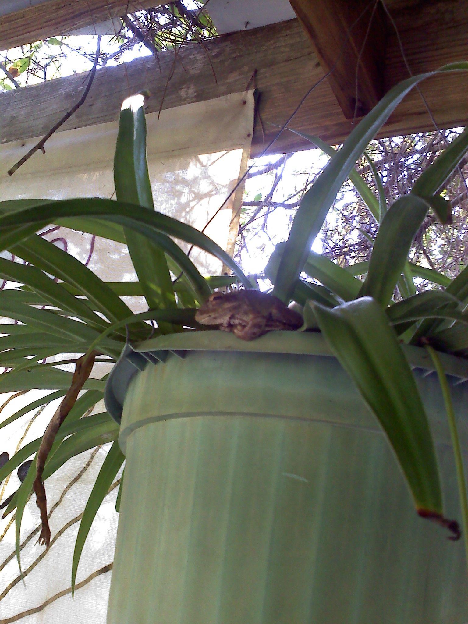Frog in my potting shed | Garden, Plants, Potting shed