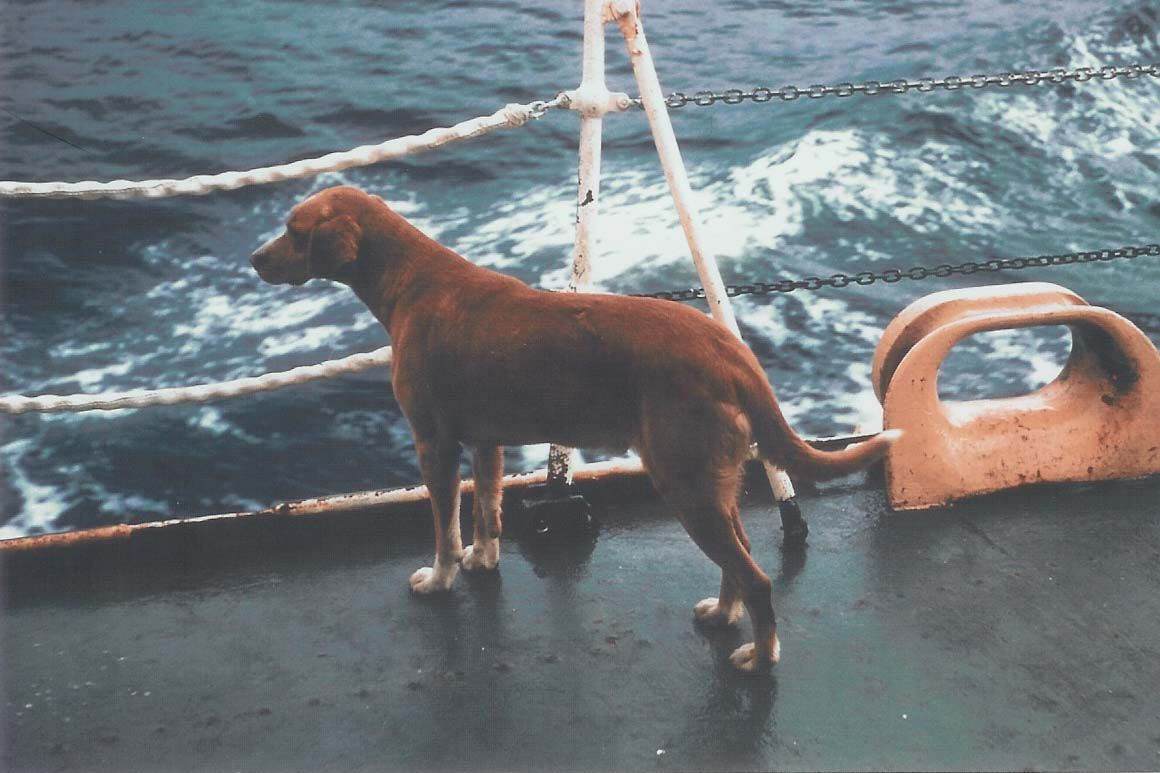 Red Dog, mascot of the Coast Guard Cutter Storis. (Named for the Red Dog  Saloon). Link to stories about him.
