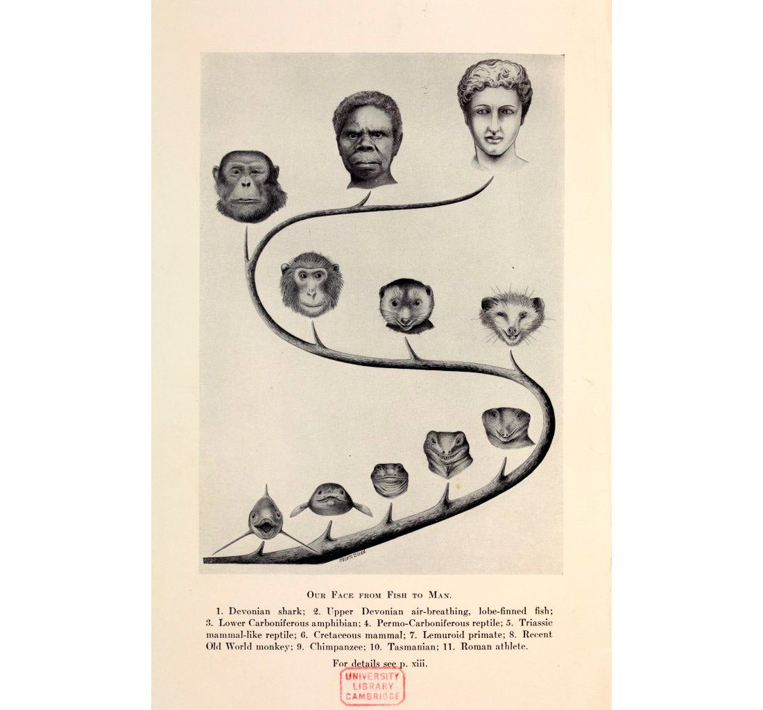 Books Babies Communicating Reproduction Darwin Evolution Baby Book Face Drawing [ 1024 x 1100 Pixel ]