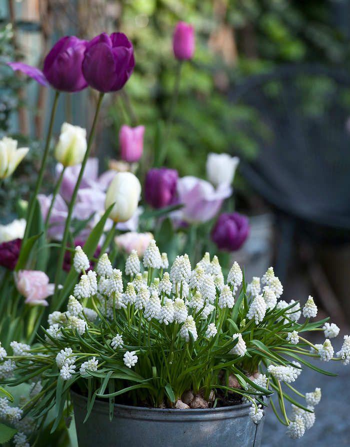 Bulbes De Printemps Et D Hiver Des Fleurs Pour Chaque Mois Fleur Hiver Fleurs Printemps Bulbes De Printemps