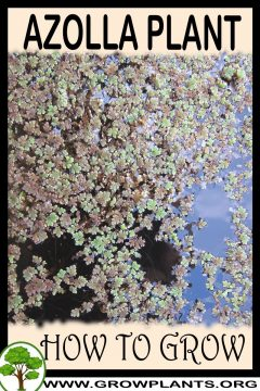 Photo of Azolla – How to grow & care