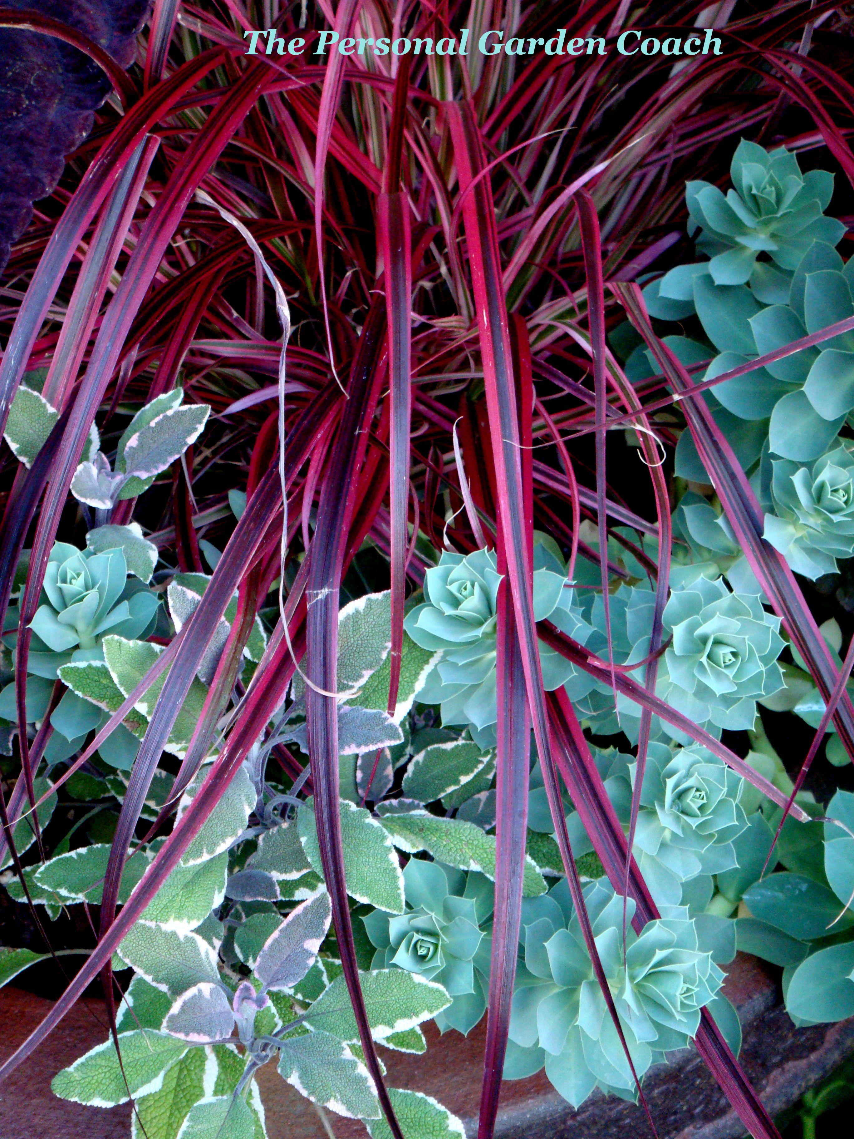 Pink Fountain Grass Tri Color Sage And Euphorbia M Garden Plant Pots Purple Plants Ornamental Grasses