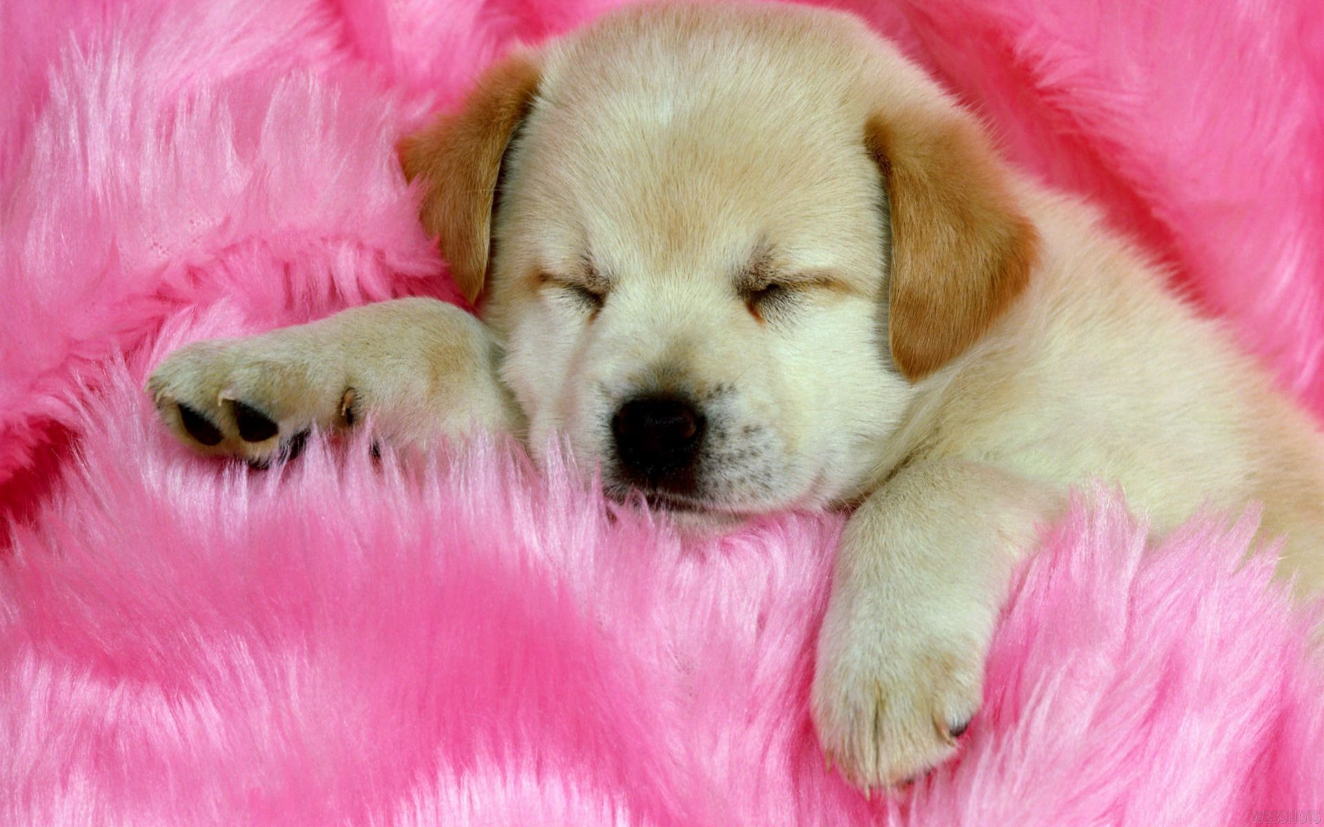 Cute Dog Wallpaper Android Apps on Google Play