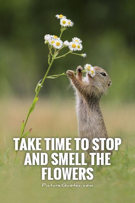 Take Time To Stop And Smell The Flowers Picture Quotes Life