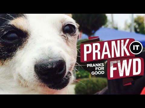 Abused Dogs Get Surprise Of A Lifetime Prank It Fwd Must Love Dogs Animals Dogs Animal Abuse