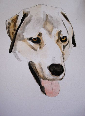 Water Paint Dogs Watercolor Dog Painting In Progress