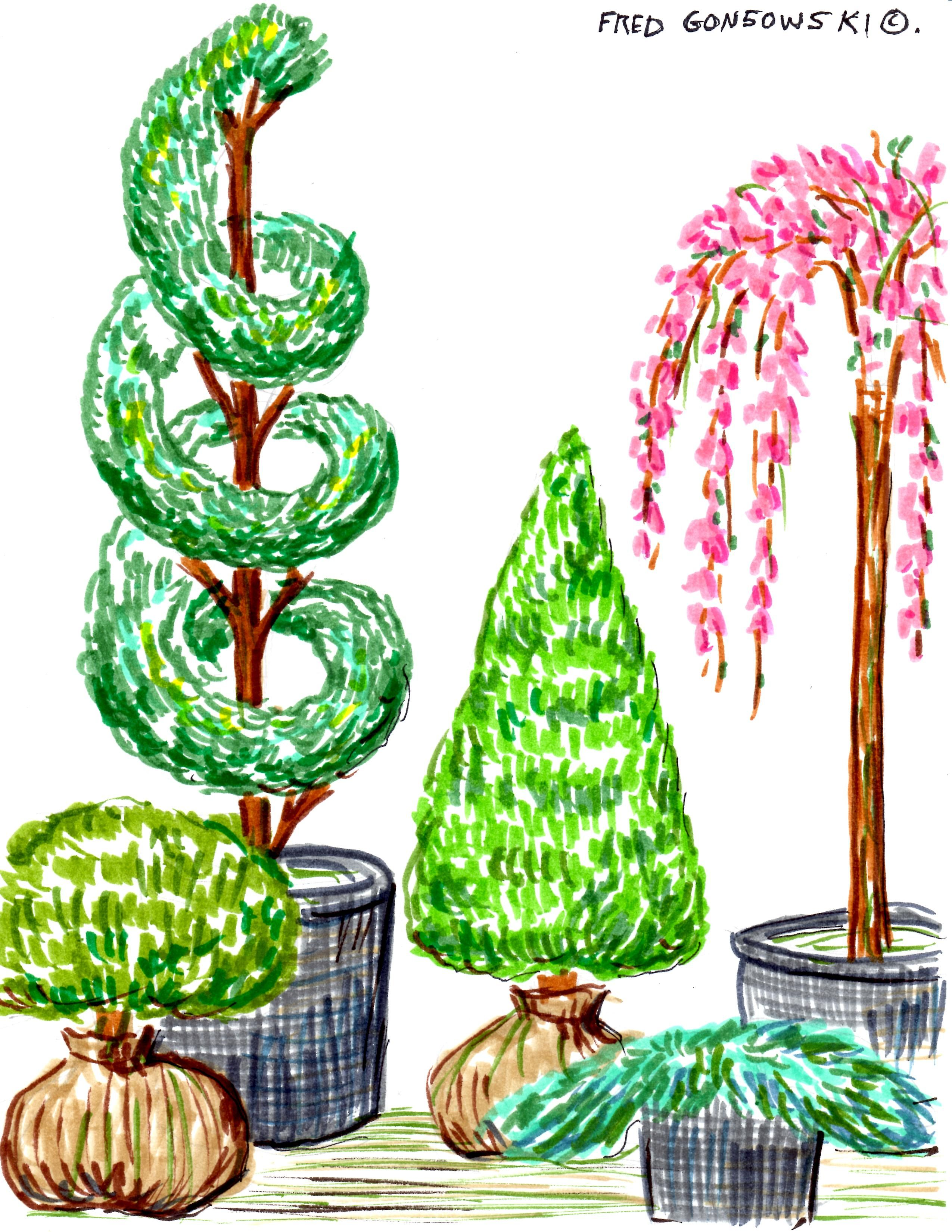 Planting Foundation Plants in Front of your Home.