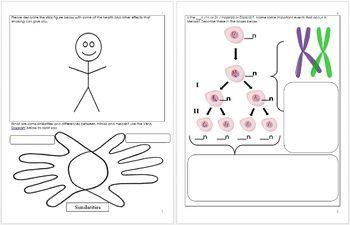 DNA and Genetics Unit Homework | Genetics, Homework, Cell ...