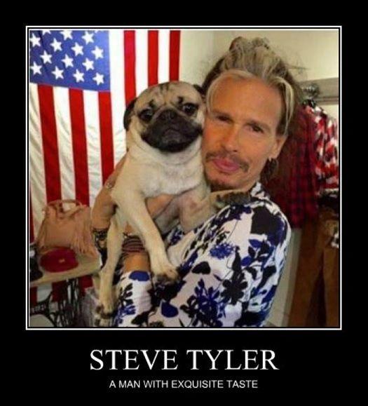 Steven Tyler On Pugs Doug The Pug Cute Pugs