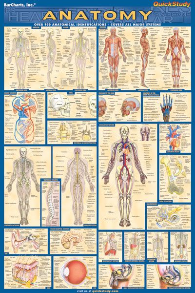 Anatomy Laminated 9781423220770 Occupational Therapy Teacher