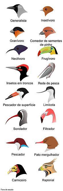 Bico – Wikipédia, a enciclopédia livre   LIBROS INFANTILES ...