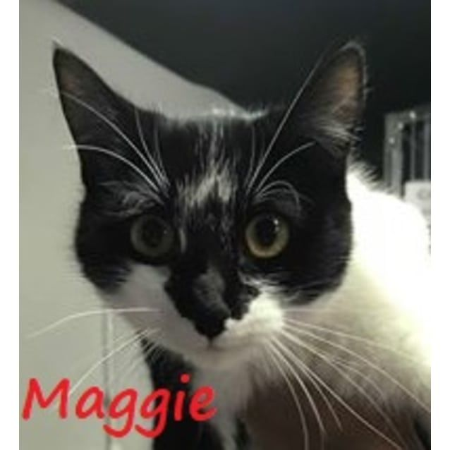 Beautiful Nature. Maggie Was Found Abandoned In An