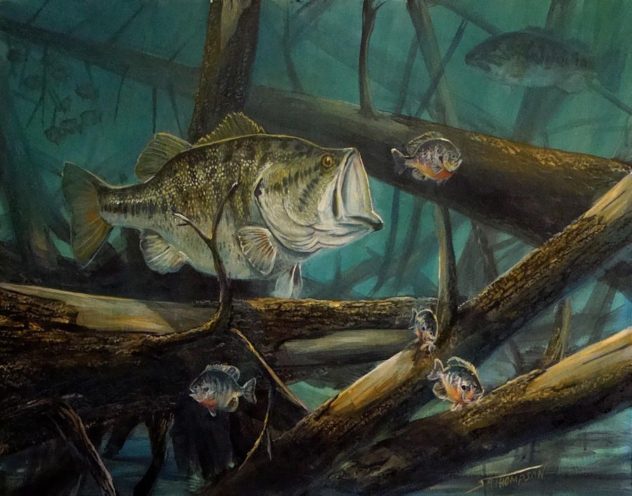 Paintings of large mouth bass google search bass for Bass fish painting