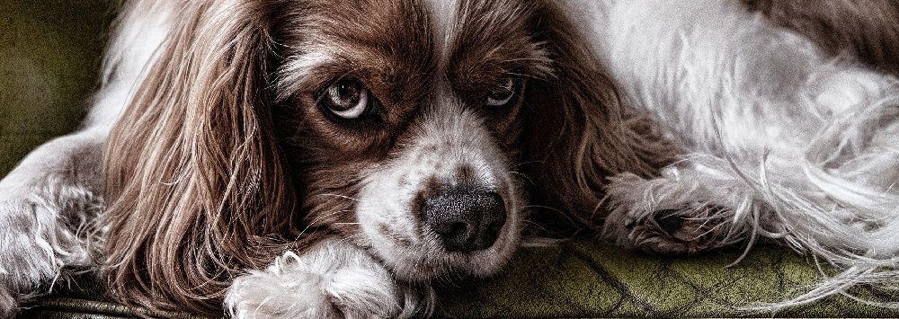Durchfall Beim Hund 8 Ursachen Symptome Therapie Durchfall Beim Hund Durchfall Hund Und Hunde