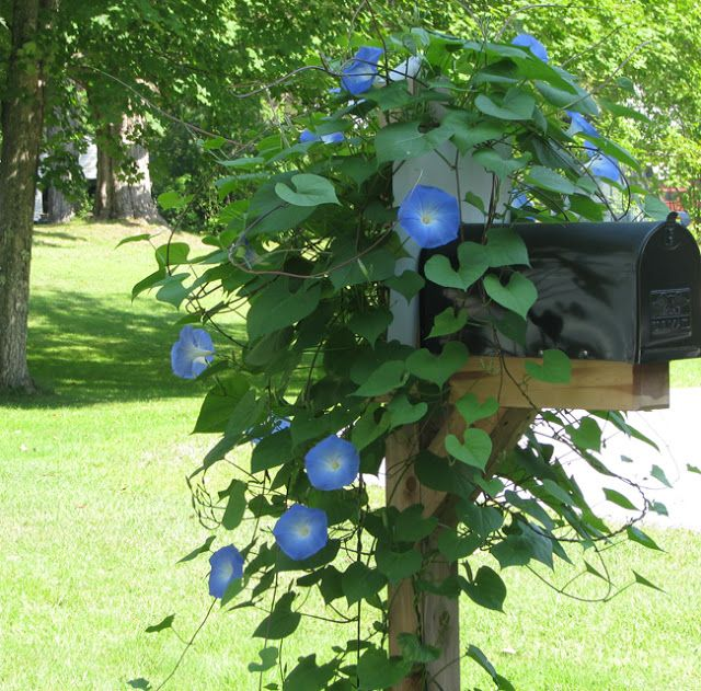 Pin By Debbie Cravens Gessaman On Bedrooms And Kitchens Mailbox Flowers Mailbox Landscaping Garden Vines