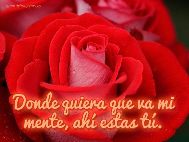 Imagenes De Rosas Con Movimiento: Imágenes Bonitas De Corazones Y Rosas Con Brillo