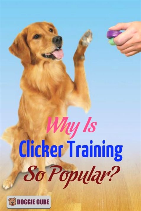 Dog Training Collar Reviews Dog Training Stick Dog Training
