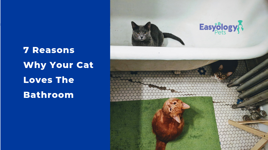 7 Reasons Why Your Cat Loves The Bathroom Cat Love Cats Love Pet